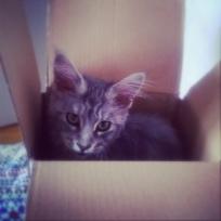 Indy et la boîte !