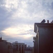 Un pigeon !